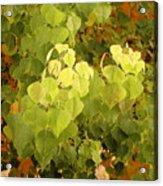 Fall Leaves. Acrylic Print