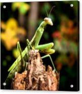 Fall Mantis Acrylic Print by Karen M Scovill