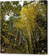 Fall Maple In Yosemite Acrylic Print