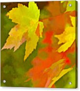 Fall Of Leaf Acrylic Print