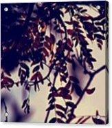 Fall Of Shades Acrylic Print