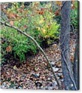Fall On The Bike Trail Acrylic Print