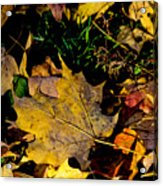 Fall On The Ground Acrylic Print