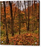 Fall On The Ice Age Trail Acrylic Print