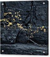 Fall On The Rocks Acrylic Print