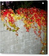 Fall On The Wall Acrylic Print