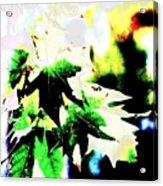 Fall Overture Acrylic Print