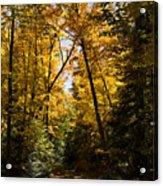 Fall Path In Golden Yellow Acrylic Print
