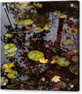 Fall Pond Reflections - A Story Of Waterlilies And Japanese Maple Trees - Take One Acrylic Print