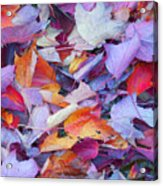 Fall Purples  Acrylic Print