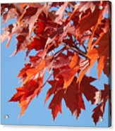 Fall Red Orange Leaves Blue Sky Baslee Troutman Acrylic Print