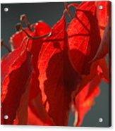Fall Reds Acrylic Print