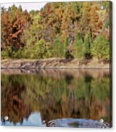 Fall Reflections - 1 Acrylic Print by Randy Muir