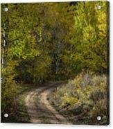 Fall Roads Acrylic Print