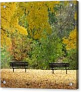 Fall Series 12 Acrylic Print
