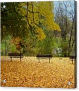 Fall Series 13 Acrylic Print