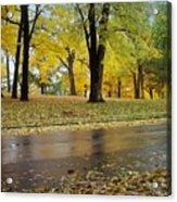 Fall Series 15 Acrylic Print