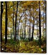 Fall Series 3 Acrylic Print