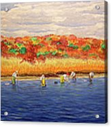 Fall Shellfishing In New England Acrylic Print