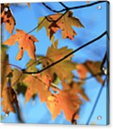 Fall Song Acrylic Print