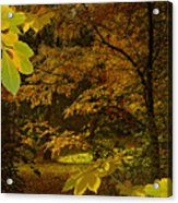 Fall Spendor - Series Number Three Acrylic Print