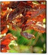 Fall Spiderweb Acrylic Print