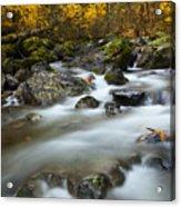Fall Surge Acrylic Print