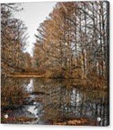 Fall Swamp Acrylic Print