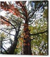 Fall Tall Acrylic Print