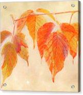 Fall Together Acrylic Print