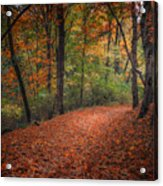 Fall Trail Acrylic Print