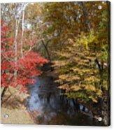 Fall Transition Acrylic Print