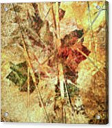 Fall Treasures Acrylic Print