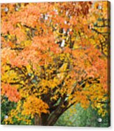 Fall Tree Art Print Autumn Leaves Acrylic Print