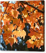 Fall Tree Art Prints Orange Autumn Leaves Baslee Troutman Acrylic Print