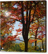 Fall Tree Colors I Acrylic Print