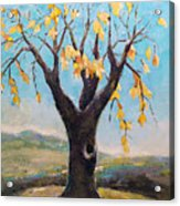 Fall Tree In Virginia Acrylic Print by Becky Kim