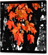 Fall Tree Acrylic Print by Karen M Scovill