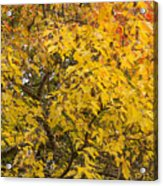 Fall Tree Leaves 2 Acrylic Print