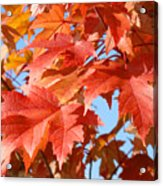Fall Tree Leaves Art Prints Blue Sky Autumn Baslee Troutman Acrylic Print