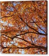 Fall Tree With Star Burst Acrylic Print