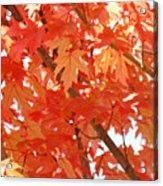 Fall Trees Colorful Autumn Leaves Art Baslee Troutman Acrylic Print