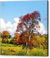 Fall Trees In Country Field Acrylic Print