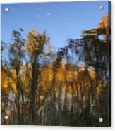 Fall Trees Reflected Acrylic Print