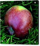 Fallen Apple Acrylic Print
