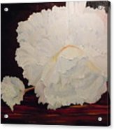 Fallen Begonia Acrylic Print