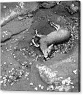 Fallen Deer Acrylic Print