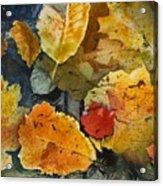 Fallen Acrylic Print by Elizabeth Carr