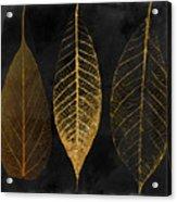 Fallen Gold II Autumn Leaves Acrylic Print