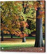 Fallen Leaves II Acrylic Print